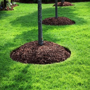 What Are The Reasons Of Tree Mulching?